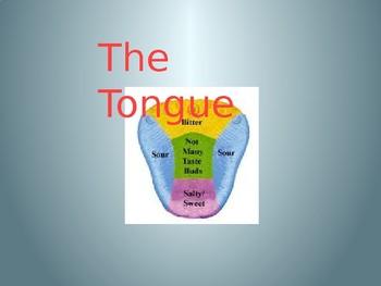 taste powerpoint