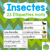 Insectes Étiquettes mots- Bugs Word Wall French