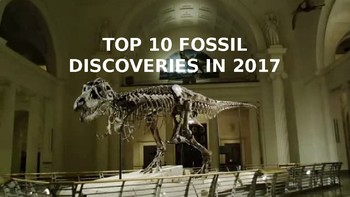 top 10 fossils of 2017