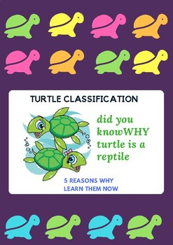 turtle classification