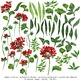 watercolor flowers, geranium clipart set #15