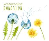 watercolor flowers, dandelion clipart set #25