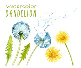 watercolor flowers, dandelion clipart set #25