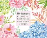 watercolor flowers clipart set, hydrangea #27