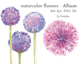 watercolor flowers, allium clipart set #8