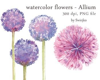 watercolor flowers, allium clipart set #8