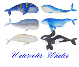 whale clipart, sea clipart, watercolor whales, illustration, Marine mammals