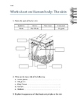 worksheet on human skin