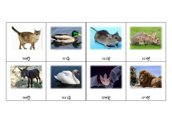 Memory Game - Animals Beginning with the Letter... (Hebrew)