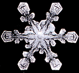 Photo of a real snowflake.