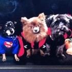 3 Dogs and a Teacher