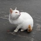 A Cat in High School