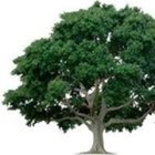 A Learning Tree