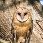 Behaviorist Owl