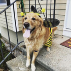 Busy A-Bee-C's