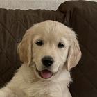 Carolyn Sellars