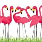'Class'y Flamingos
