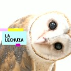 Comprehensive Lessons