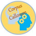 CorpusCallosum
