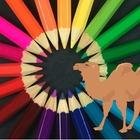 Creative Camel