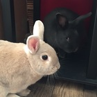 Curious Bunny Resources