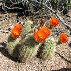 Desert Blossom Learning