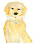 Dog Bone Coaching