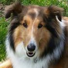 doggie dog fun writing and journalism stuff