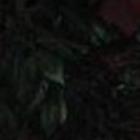 Erin Prashad