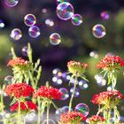 Flores y Burbujas