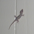 Gecko on the Wall Homeschool Resources