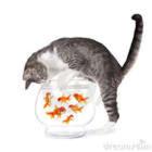 GO FISH BLITZ