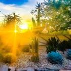 Golden Cactus Social Studies