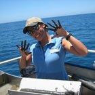 Inquiry Based Biology and Marine Biology
