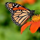 Jan's Butterfly Math