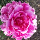 Learning in Full Bloom