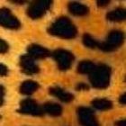 Learning In Leopard