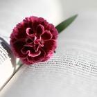 Let Learning Bloom
