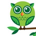 Little Owl Australia