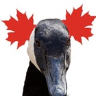 Maple Goose ESL Materials for Adult Learners