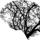 Mathacognitive