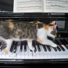 Meg's Piano Studio