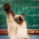 Miss Kitty's Class