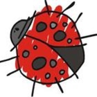 Mrs Lady Bug