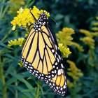 MsT The Butterfly Teacher