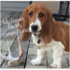 My Basset Ate My Lesson Plans