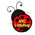 NYC Ladybug