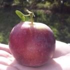 One Happy Apple