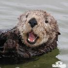 Otterly Awesome Stuff