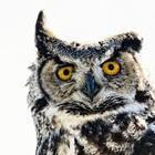 Owl Maps